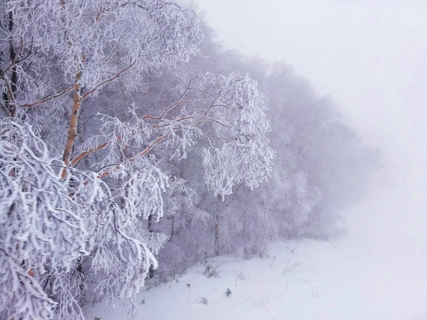 スキーシーズンの到来です!蔵王温泉スキー場ルポ