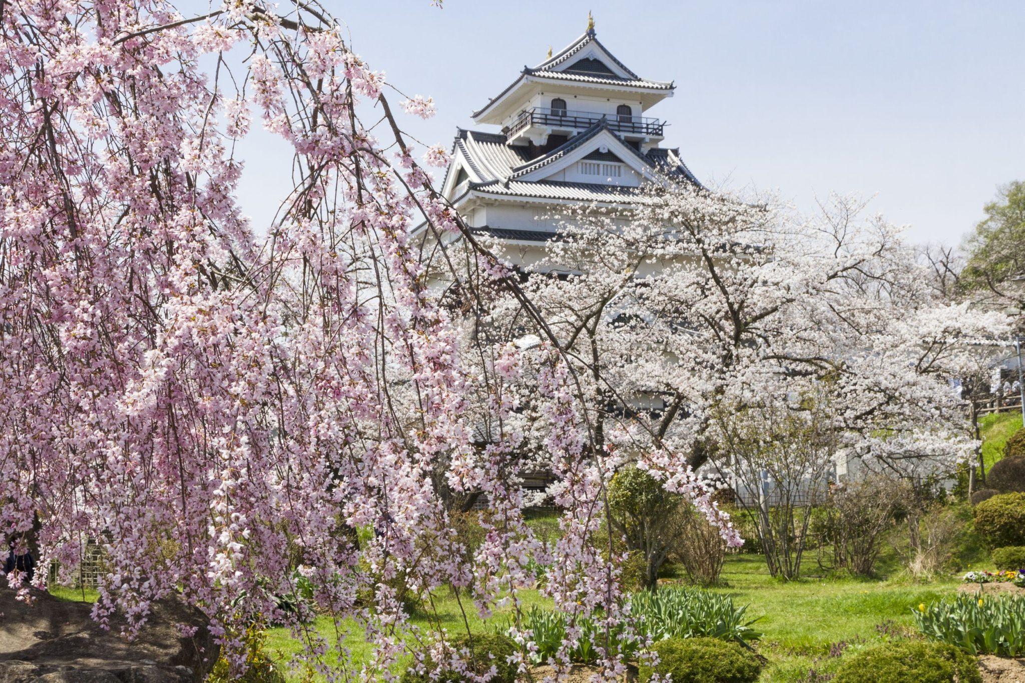 やまがた 桜の名所案内