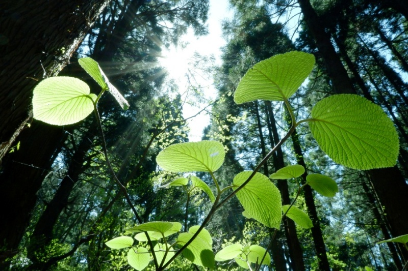 新緑を楽しむならはずせない!最上川舟下りと神秘的な幻想の森へ