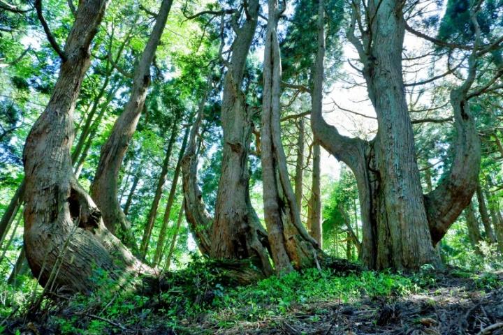 幻想の森 (戸沢村)