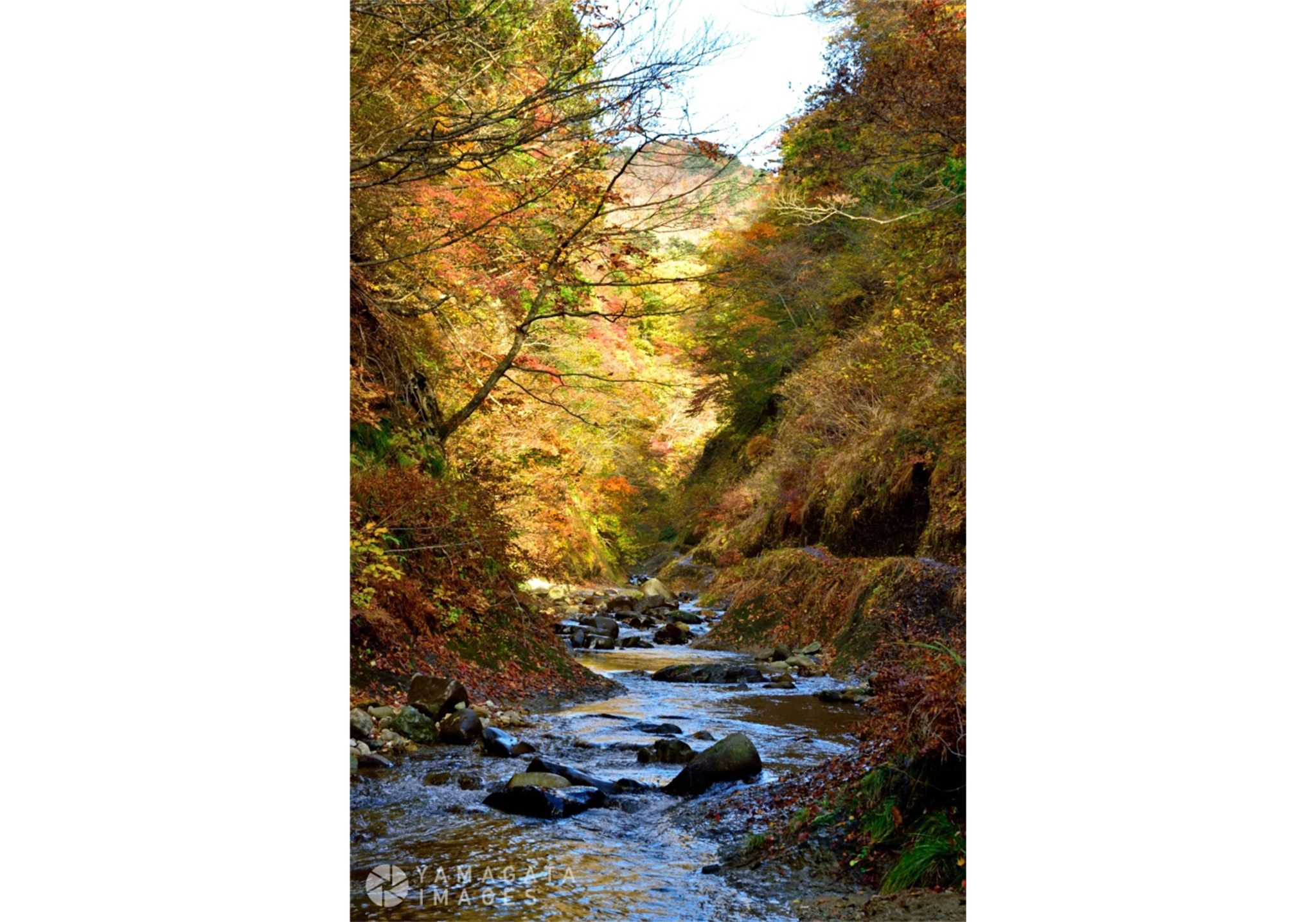 面白山紅葉川渓谷