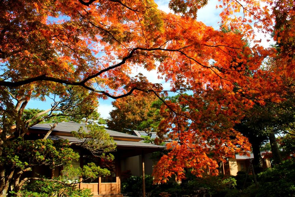 山形県緑町庭園文化学習施設「洗心庵」