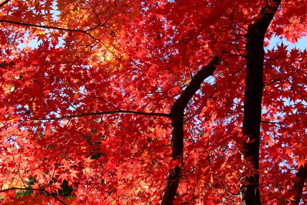 【まとめ】まさに見頃!!山形市周辺おすすめ紅葉スポット。