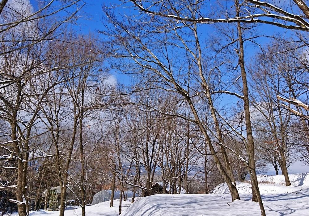 【まとめ】山形の週末イベント情報 2月15日(土)/2月16日(日)