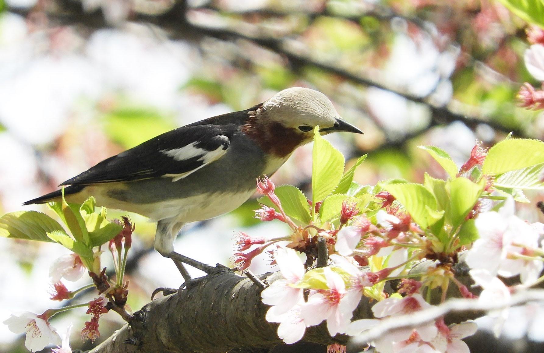【特集記事】やまがたの美しい風景 春~初夏