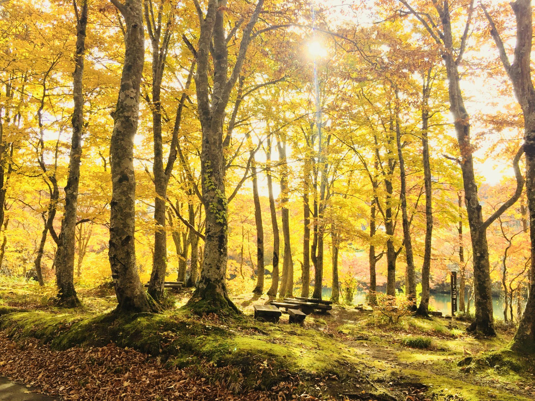 【オススメ】秋の蔵王★紅葉のドッコ沼と中央高原散策ガイドツアー