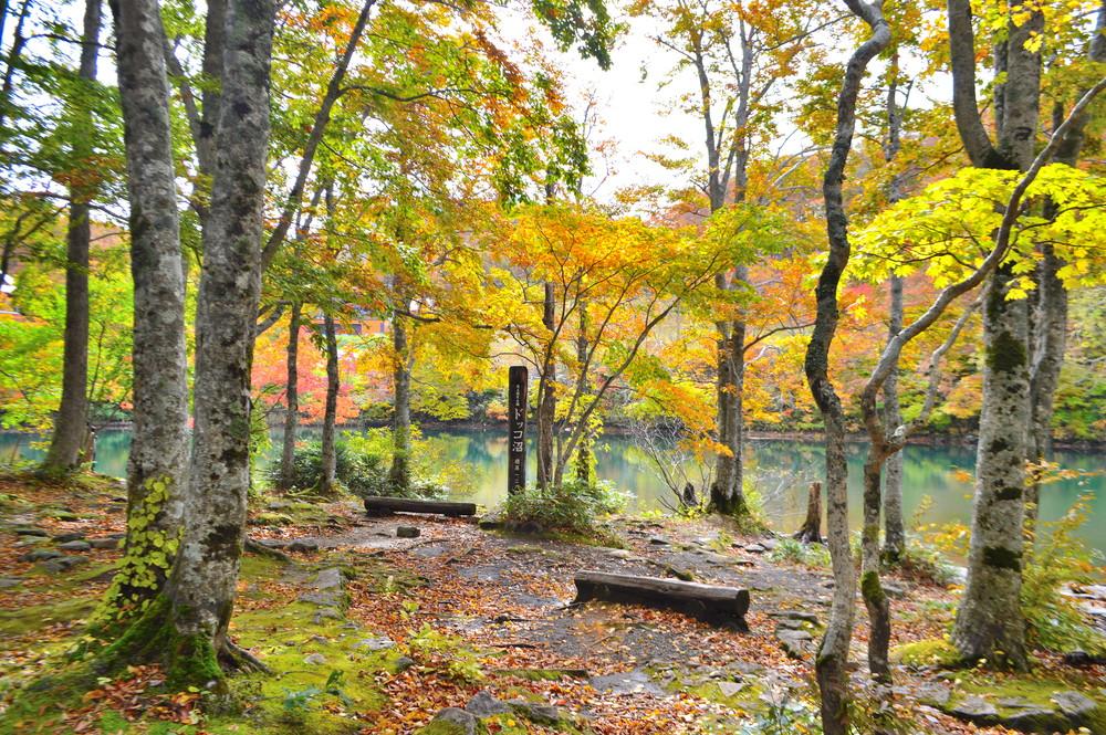 【特集記事】蔵王の紅葉の名所「ドッコ沼」を手軽に楽しむおすすめコース|心もお腹も満腹です