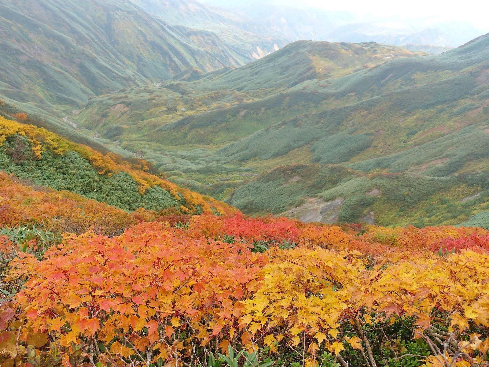 【まとめ】山形県 秋のドライブ・散策はここで決まり! 紅葉名所 おすすめ10選 (2020年度版)