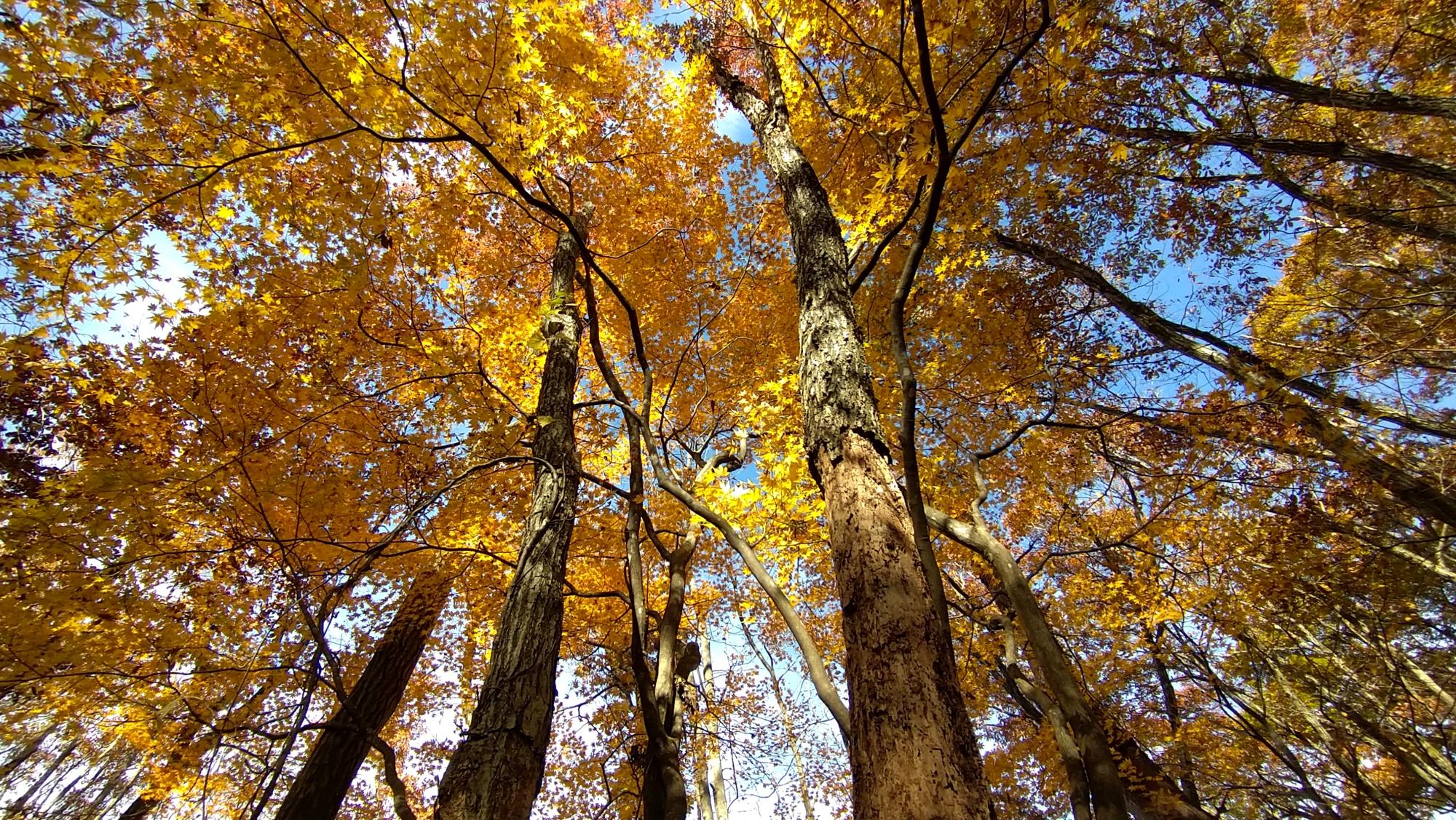 【まとめ】2020年 山形県の週末イベント情報 11月21日(土)~11月23日(月)