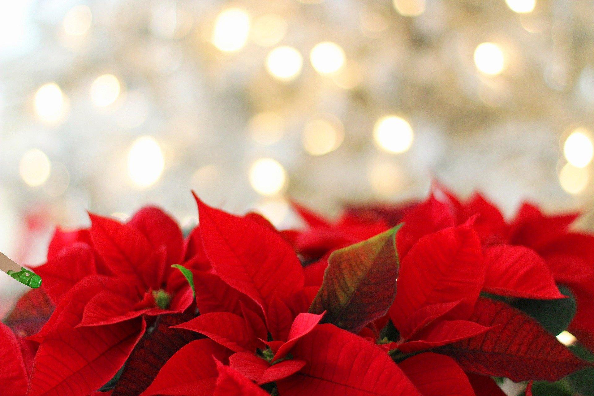 クリスマス マルシェ クラフトフェア