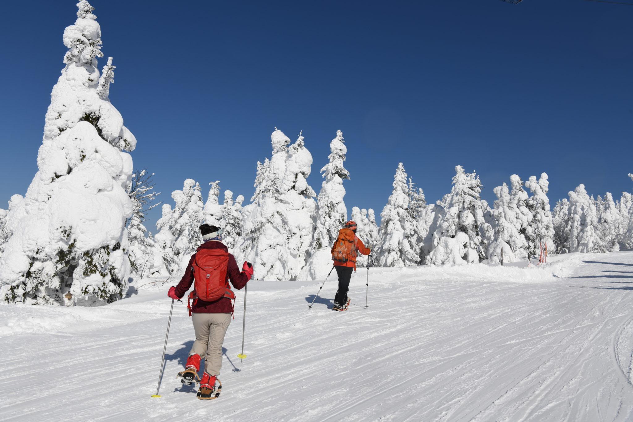 蔵王山岳インストラクターがご案内!樹氷☆霧氷を楽しみながらのかんじきスノートレッキング【ご予約はこちらから】