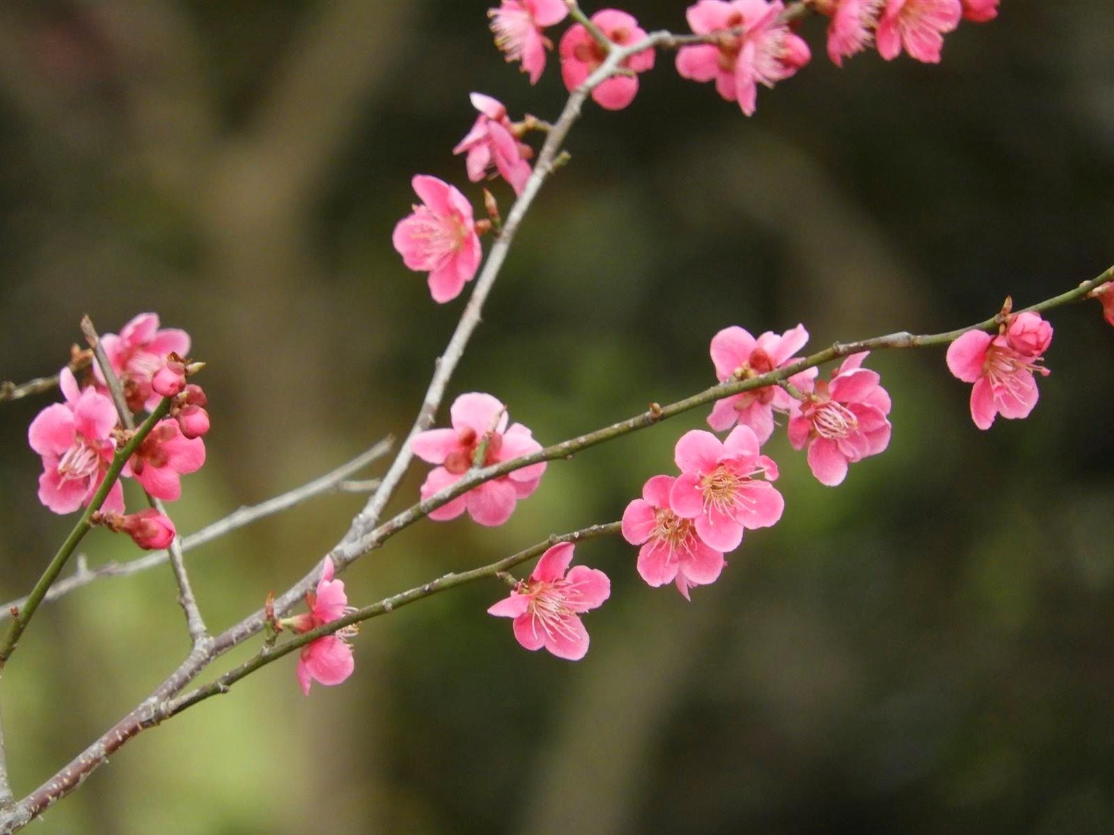 【まとめ】2021年 山形県の週末イベント情報 4月3日(土)・4月4日(日)