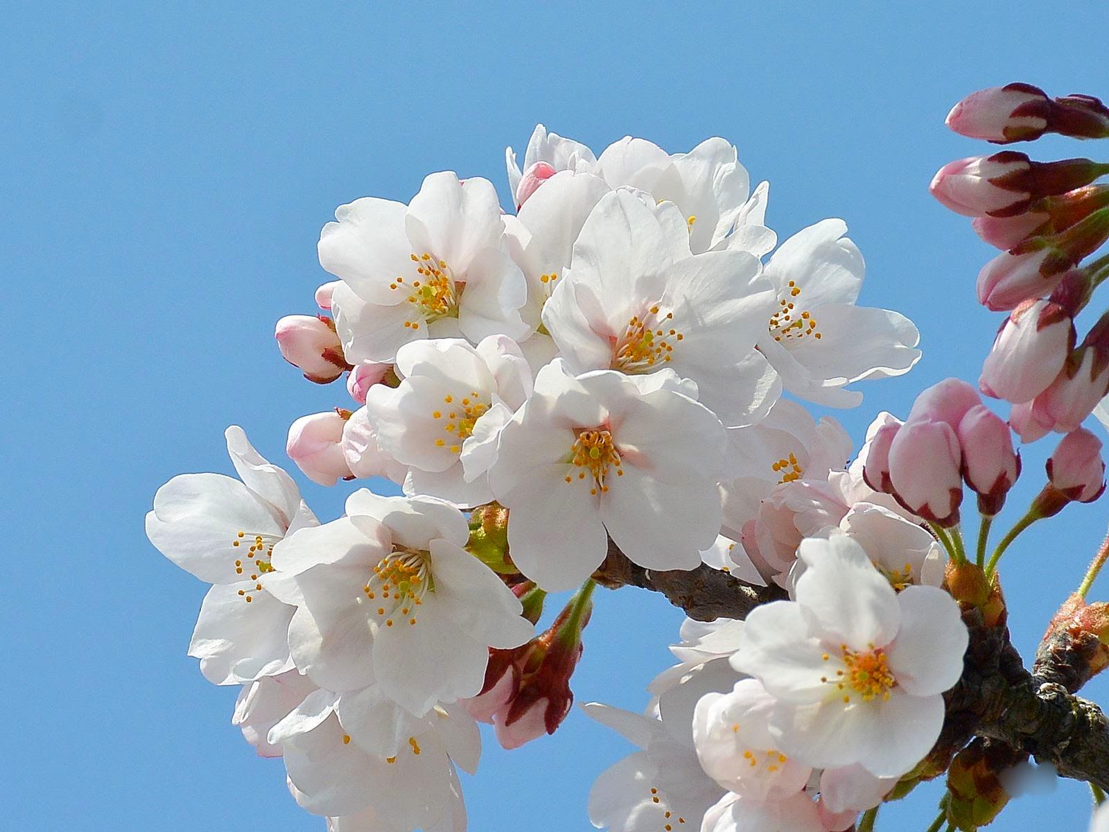 【まとめ】2021年 山形県の週末イベント情報 4月10日(土)・4月11日(日)